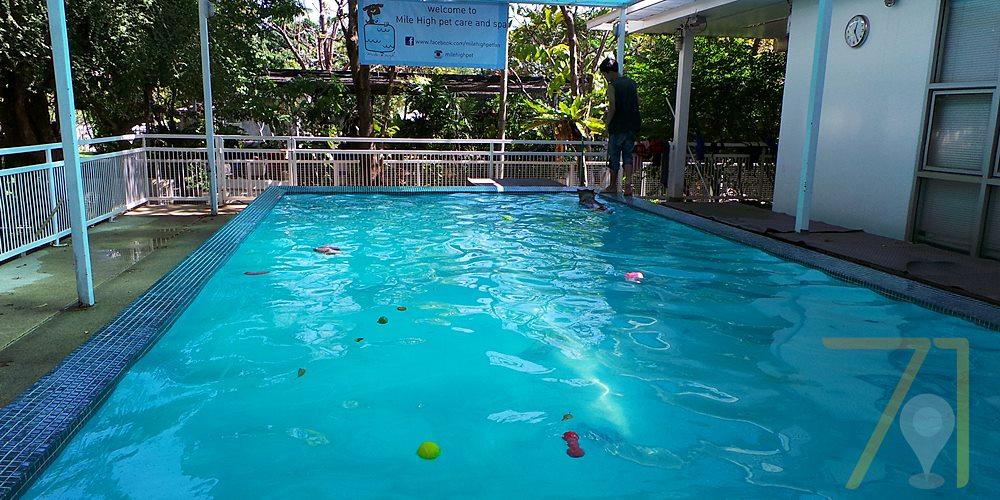 Mile High สระว่ายน้ำและโรงแรมสุนัข